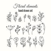 Conjunto decorativo floral de vetor. Ervas e flores silvestres. vetor