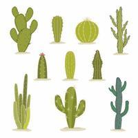 conjunto de vetores de cacto verde. plantas caseiras tropicais ou cactos de jardim de clima de verão do arizona e suculentas. coleção de plantas exóticas. elementos decorativos naturais são isolados no branco
