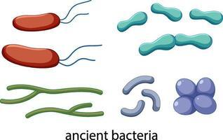 ícones de bactérias antigas definidos isolados no fundo branco vetor