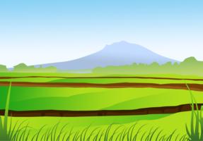 Vetor de campo de arroz