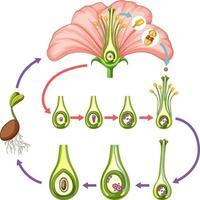 diagrama mostrando partes de flores vetor