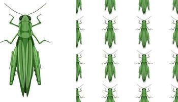 insetos gafanhotos isolados no fundo branco e sem costura vetor