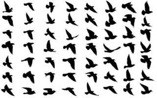 silhuetas de pássaros voando em fundo isolado. ilustração vetorial. pássaro isolado voando. desenho de fundo de tatuagem e papel de parede. céu e nuvem com pássaro voar. paleta de tonalidades de cores. vetor