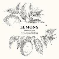 layout de moldura de vetor de limão desenhado