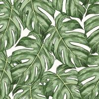 sketch monstera seamless pattern vetor