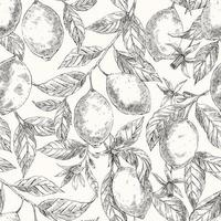 Limões mão desenhada vetor desenho sem costura padrão