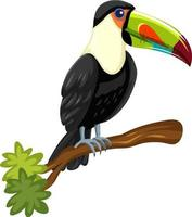 pássaro tucano em um galho isolado no fundo branco vetor