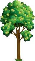 árvore frutífera de goiaba isolada em fundo branco vetor