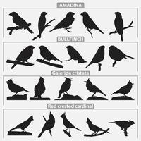 conjunto de modelos de design de vetor de silhuetas de pássaros