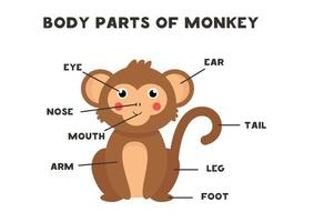 partes do corpo do macaco. esquema para crianças. vetor
