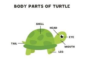 partes do corpo da tartaruga. esquema para crianças. vetor