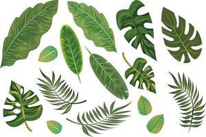 Elementos de folhas tropicais desenhados à mão isolados