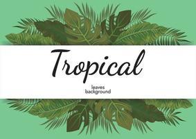 tropical folhas fundo verde ilustração vetorial design vetor
