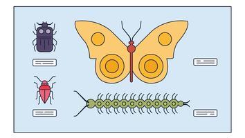 Vetor de insetos de estudo