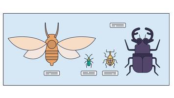 Vetor de entomologia
