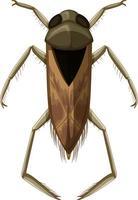 besouro backswimmer isolado no fundo branco vetor