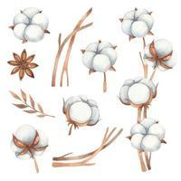 aquarela conjunto de elementos florais de flores de algodão, anis e galhos de algodão em tons de marrom vetor