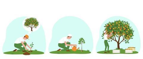 conjunto de ilustrações de como cuidar de uma árvore de tangerina vetor