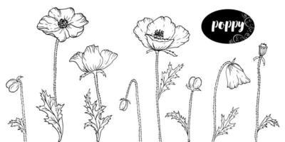 arte de linha do vetor com papoulas. papel de parede de fundo floral monocromático. design de elementos de flores para web, impressão e tecido.