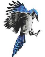 pássaro colorido realista isolado no branco vetor
