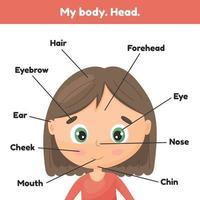 rosto garotinha bonita. partes da cabeça do pôster para inclinar a anatomia para crianças. vetor