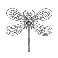 ilustração de livro para colorir inseto-besouro libélula vetor