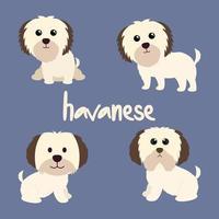 conjunto de cachorro havanês fofo vetor