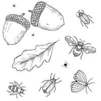 esboço de outono com bolotas, folhas de carvalho e insetos. besouro, abelha, aranha, inseto. coleção de vetores de mão desenhada.