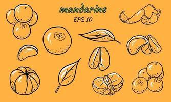 conjunto de ilustrações vetoriais de tangerinas. vetor