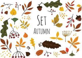 conjunto moderno e elegante de folhas de outono coloridas, frutos e sementes isolados no fundo branco em estilo escandinavo. vetor