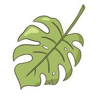 folha de monstro orgânico tropical vetor