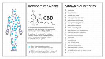 como funciona o cbd, pôster branco em estilo minimalista com infográficos, fórmula química de canabidiol e lista de benefícios do canabidiol vetor