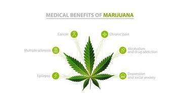 benefícios médicos da maconha, pôster de informações branco com ícones de benefícios e folhas verdes de cannabis vetor