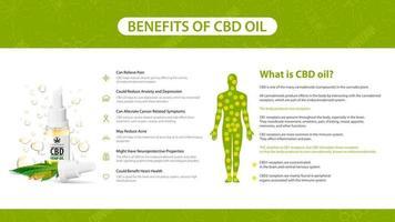 pôster de informações dos benefícios do óleo cbd. o que é óleo cbd, pôster branco em estilo minimalista com infográficos, receptores de endocanabinoides no corpo humano e lista de benefícios de canabidiol vetor