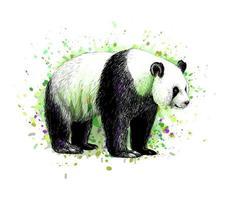 retrato de um urso panda de um toque de aquarela, esboço desenhado à mão. ilustração vetorial de tintas vetor