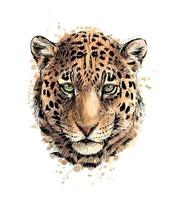 retrato de uma cabeça de leopardo de um toque de aquarela, esboço desenhado à mão. ilustração vetorial de tintas vetor