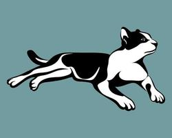 gato preto e branco com fundo azul eps 10