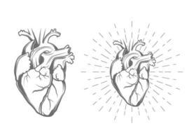 ilustração do coração humano vetor