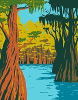 cipreste careca crescendo no pântano do riacho coruja na floresta nacional de apalachicola vetor