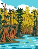 cipreste careca crescendo no pântano ao sul da floresta nacional de apalachicola vetor