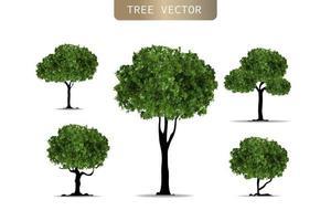 árvore realista sobre fundo branco. ilustração em vetor eps10.