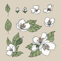 Flores de jasmim rabiscadas vetor