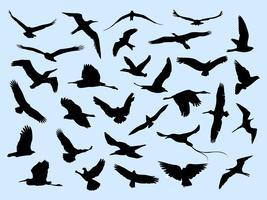 30 diferentes pássaros voando vetor