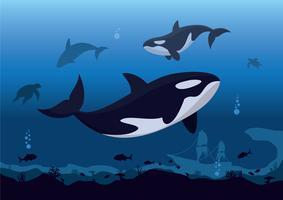 Baleias assassinas vetor