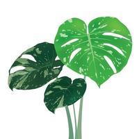 folhas verdes em vetor gráfico de ilustração