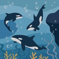 Ilustração de baleias assassinas vetor