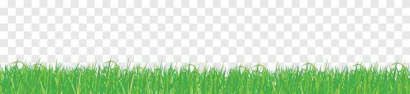 fundo transparente de grama isolada vetor