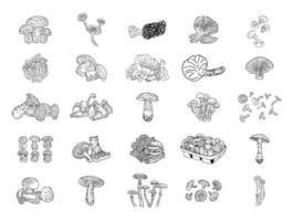 produtos de cogumelos. ilustração vetorial. vetor