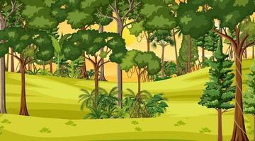 cena da paisagem da floresta na hora do pôr do sol vetor