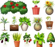 conjunto de diferentes plantas em vasos isolados no fundo branco vetor